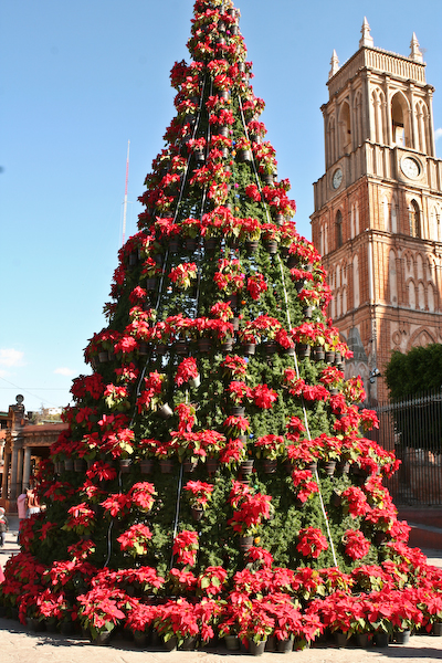 Christmas In San Miguel de Allende-Tree
